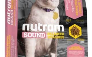 Обзор корма для кошек Nutram
