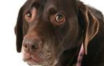 Как подойти к робкой или пугливой собаке