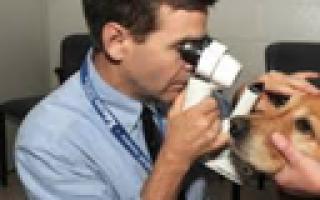 Обзор и отзывы  корма для собак Eukanuba
