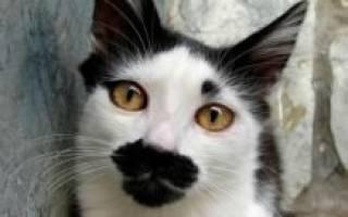 Самые редкие окрасы кошек