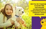 Вакдерм для собак- инструкция по применению