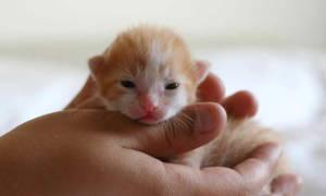 Этапы развития котят