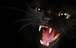 Чем вызвана агрессия кошки?