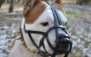 Как подобрать намордник собаке?
