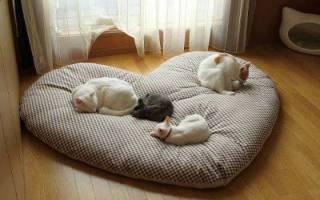 Как сделать лежанку для кошки?