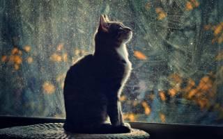 Как отучить кошку будить хозяев по утрам?