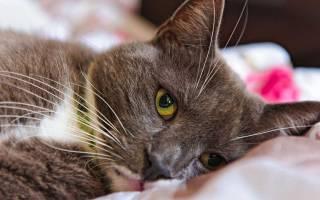Симптомы различных заболеваний у кошек