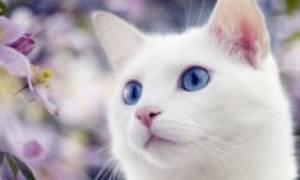 Как определить начинающиеся роды у кошки?