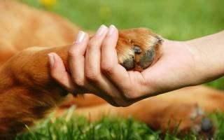 Вывихи — как лечить у собак