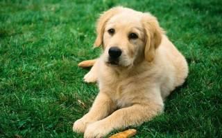 Тронцил для собак — инструкция по применению