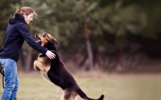 Как обучить щенка команде «Комне»?