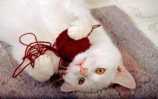 Почему кошка ест шерсть и чем это опасно?