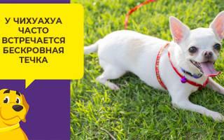 Как научить собаку ловить летающую тарелку
