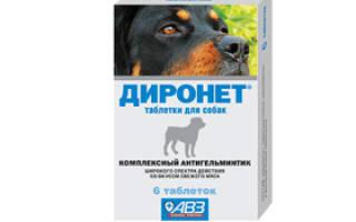 Диронет для собак: инструкция по применению, отзывы, цена
