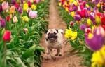 Как ухаживать за собакой весной: полезные советы