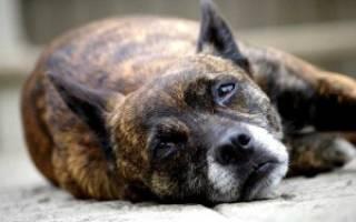 5 правил ухода за пожилой собакой