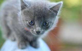 Клички для котят-девочек по алфавиту