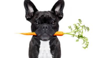 Ветмедин — инструкция по применению для собак