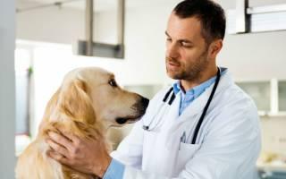 Кокоцидоз — как лечить у собак