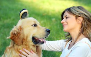 Уход за шерстью собаки: 6 типов шерсти – 6 подходов к уходу за собакой