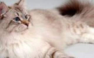 Как отучить кошку ходить в туалет в неположенном месте?