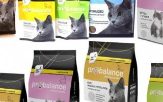 Обзор корма для кошек Probalance