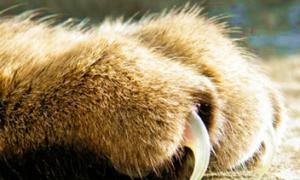 У кошки выпадают когти, что делать?