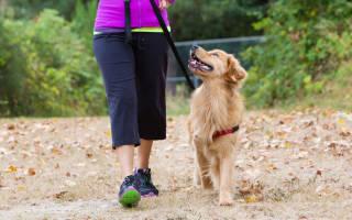 Как научить собаку ходить рядом без использования ошейника удавки