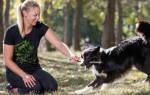 Как научить собаку приносить палочку