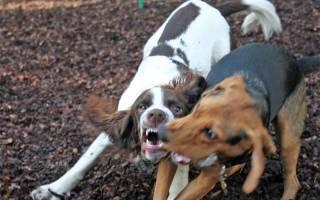 Как остановить собачью драку