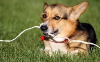 Электротравма, удар током — как лечить у собак