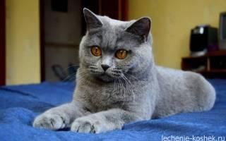 Рвота у кошки. Что делать?