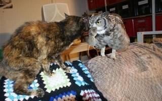 Содержание кошки с домашними птицами