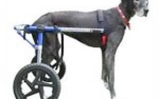 Инвалидная коляска для собаки