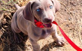 Поводки для собаки: какие бывают и какой выбрать?