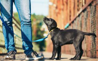 Как приучить щенка ходить в туалет