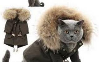 Как выбрать одежду для кошек?