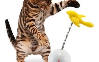 Чем занять кошку, чтобы она не скучала?