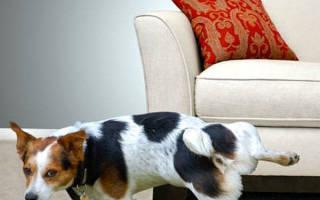 Как приучить взрослую собаку к соблюдению чистоплотности дома