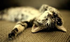 Почему кошка дергается во сне?