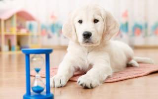 Аксессуары для щенка