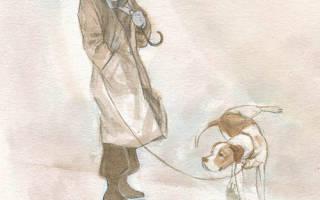 Как приучить старую собаку к соблюдению чистоплотности дома