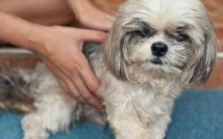 Брадикардия (Аритмии) — как лечить у собак