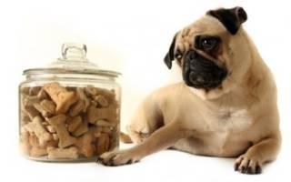 Обзор и отзывы  корма для собак Hau Hau Champion
