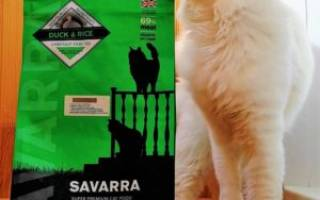 Обзор корма для кошек Savarra