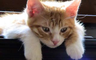 Как приучить котенка к кличке?