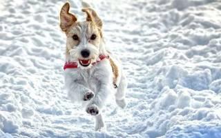 Как одеть собаку к зиме