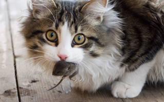 Почему кошки приносят добычу домой?