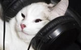 Как кошки реагируют на музыку?