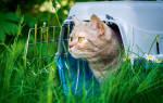 Как подготовить кошку к жизни на даче?